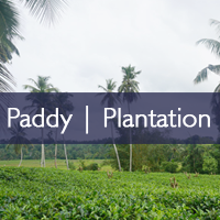 Paddy/Plantation