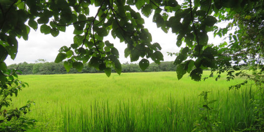 Elevated Land with Amazing paddy view
