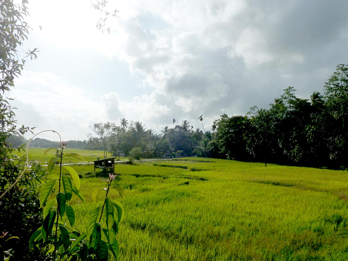 Paddy views with Small House