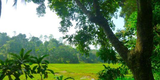 Beautiful Antique house in peaceful area – Ahangama