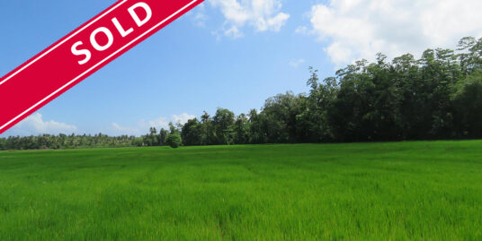 Stunning paddy field views with unlimited potential