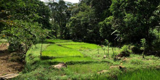 Located high-breathtaking views tea plantation
