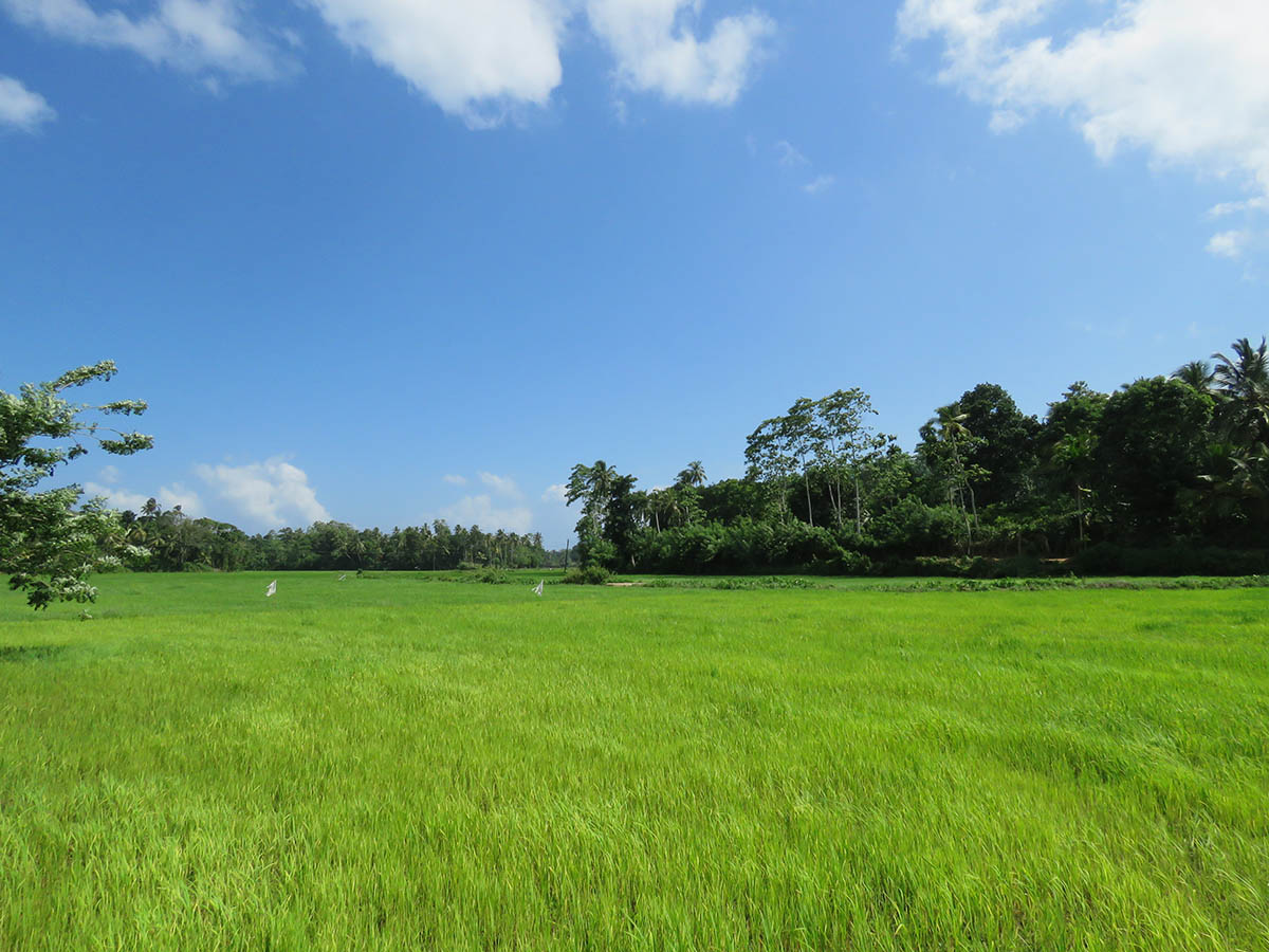 Large Land With Spectacular Paddy Views