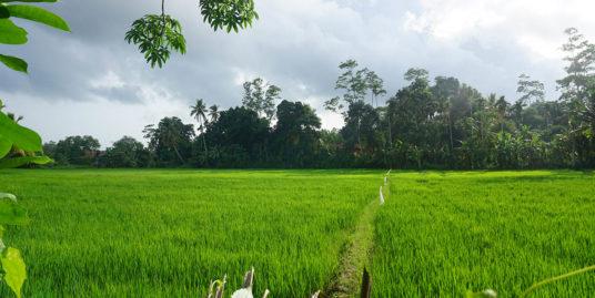 11 Acres mixed plantation land