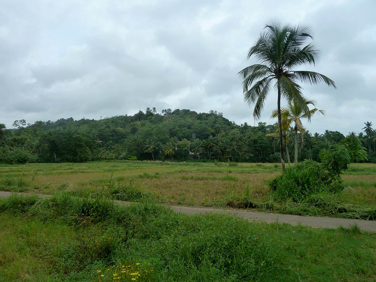 Surrounded by nature and distant views over the paddy fields