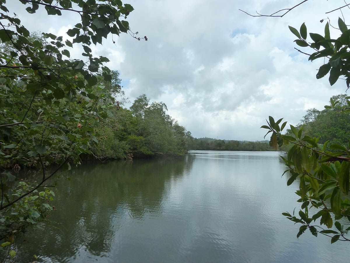 Mangroves, river frontage and views