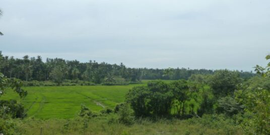 3 Acres, paddy field views