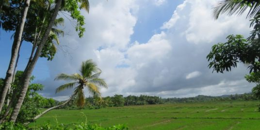 Peaceful And Private With Paddy Views