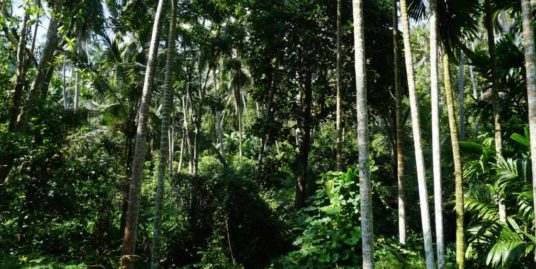 1.8 Acres paddy field views