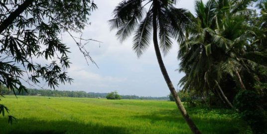 Attractive land with paddy field views