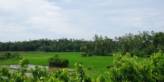 Elevated paddy island