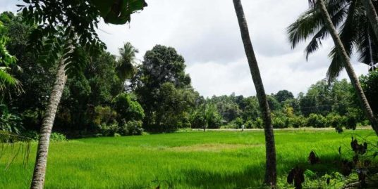 New house, elevated paddy field views
