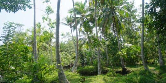 Eco-friendly bare land