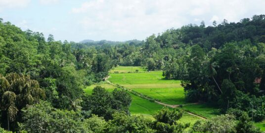 Elevated paddy view land with house