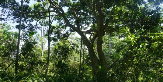 4 Acres Paddy Island