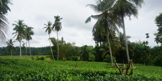 Tea Estate with great views