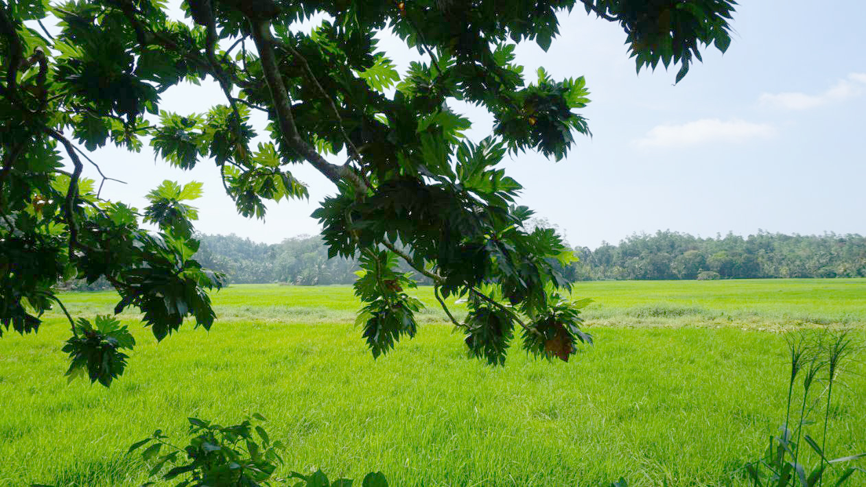 Meepe land with paddy field views