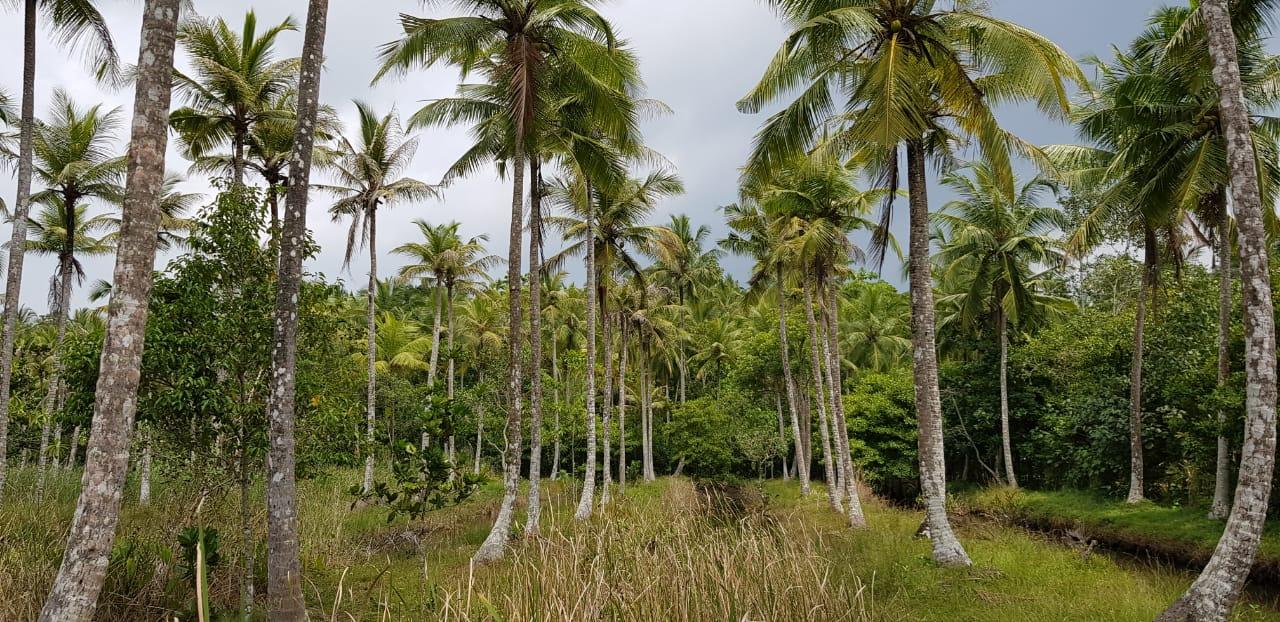 Talpe Mangroves vacant land