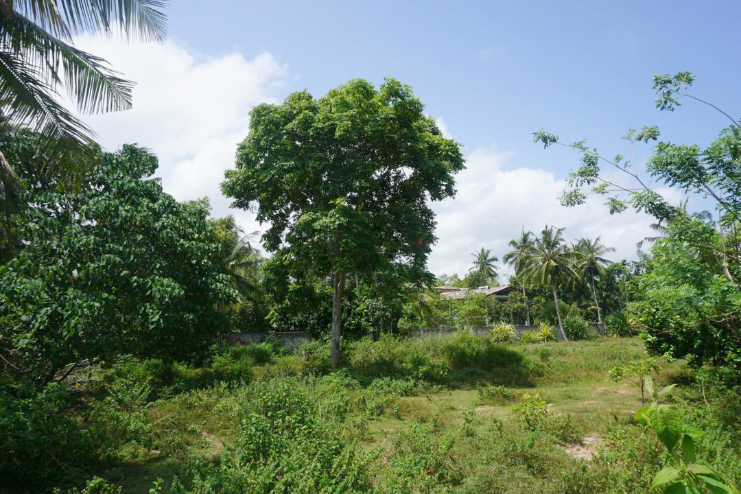 Talpe large vacant land, good location