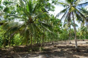 LIP-214-Prime land in the heart of Thalpe