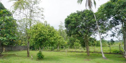 Large paddy view land in Habaraduwa