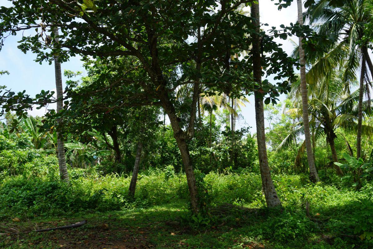 Vacant land for sale in Welhengoda