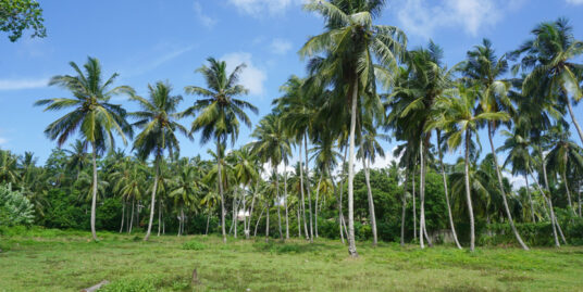 Large land in good area