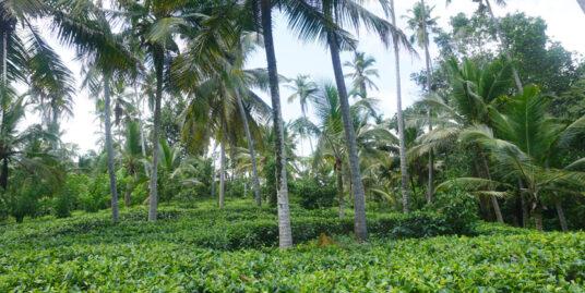 Tea plantation for sale in Ahangama