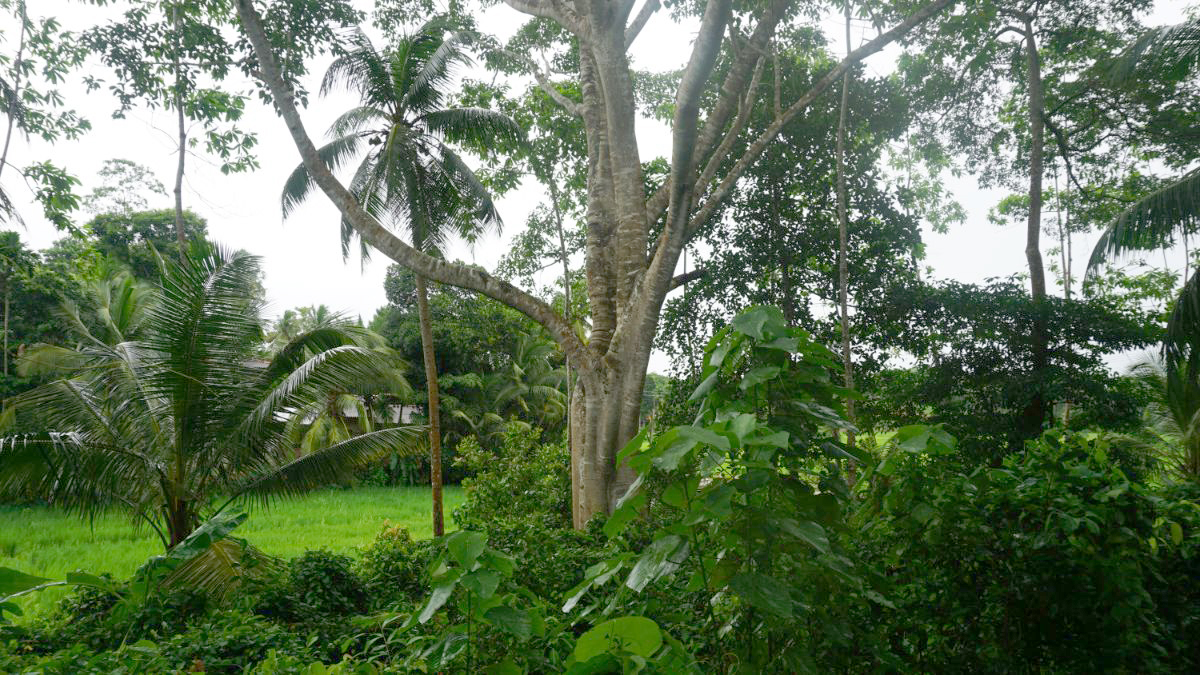 2 Acre Paddy Island for sale