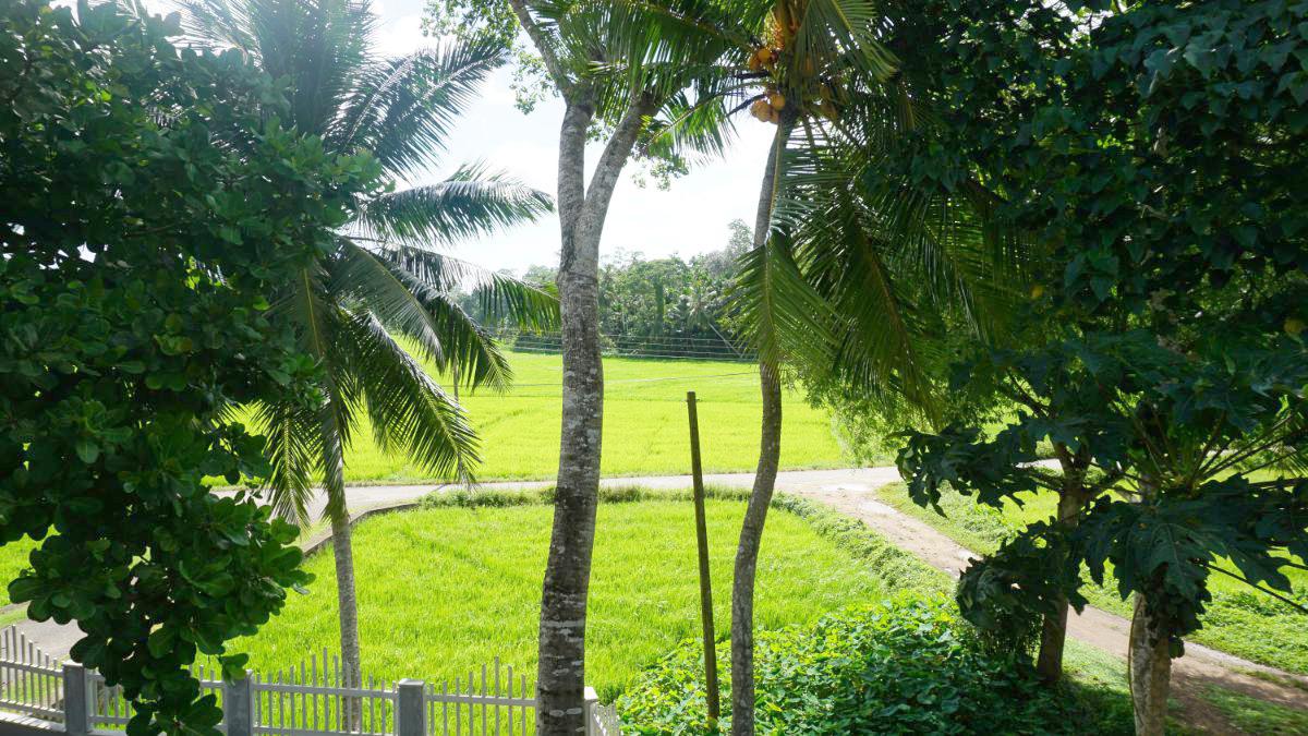 Modern Villa with paddy views