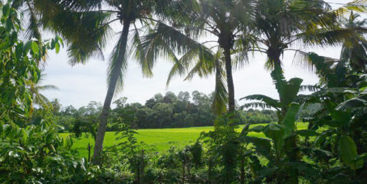Vacant land with paddy field views