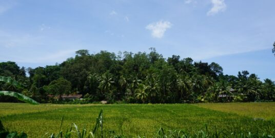 Attractive paddy view land