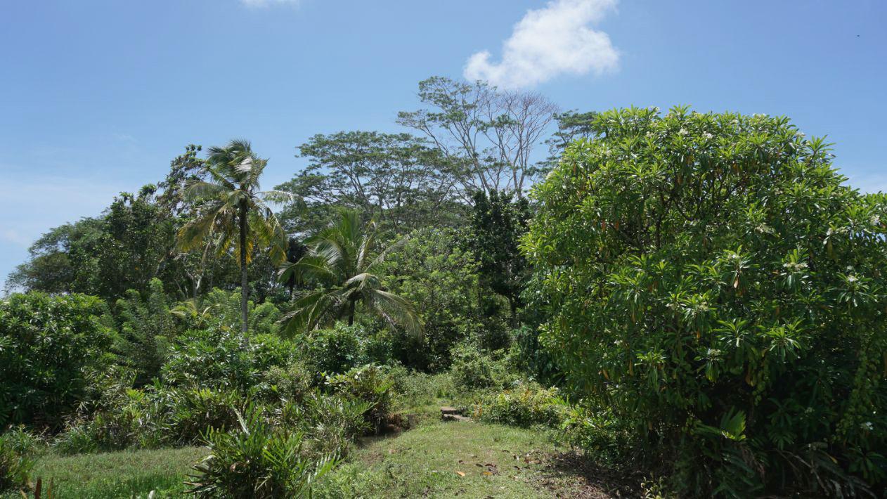 Kathaluwa Paddy island