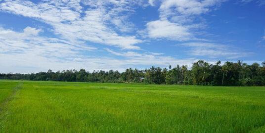 Ahangama Nakanda paddy view land