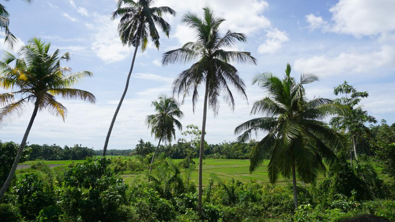 Ahangama, Ibbawela paddy view land