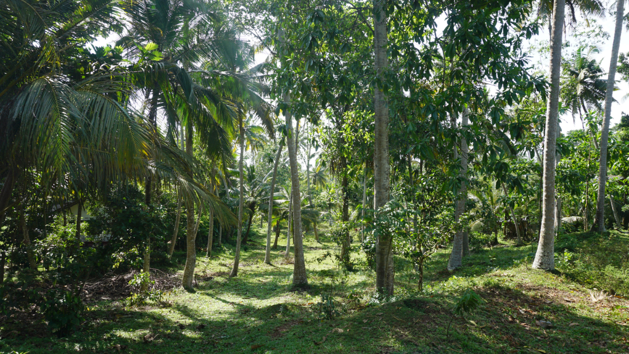 Goviyapana 186 Perch vacant land