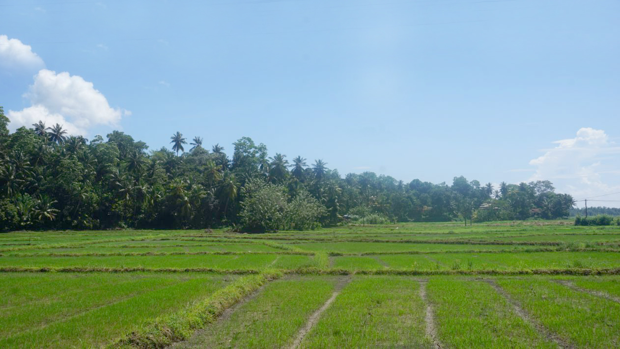Westerly facing vacant land with paddy views