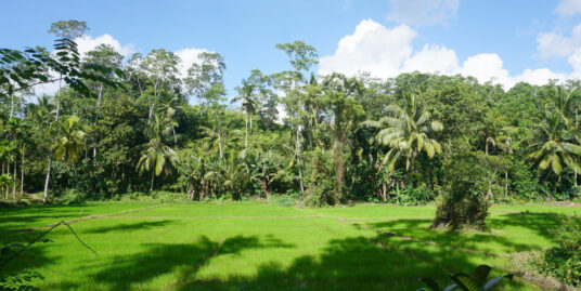 Vacant land with sweeping paddy field views
