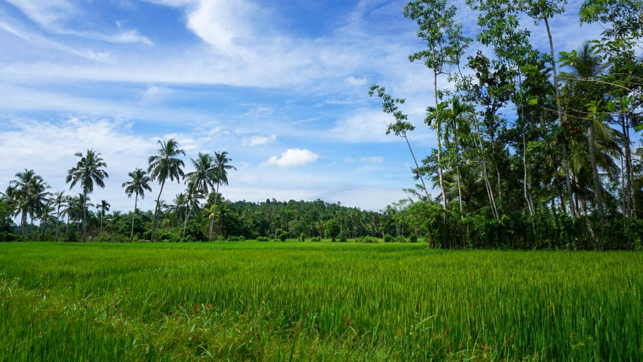 Ahangama land, great location with paddy field views