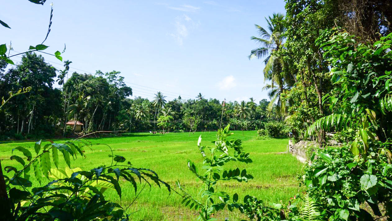 Habaraduwa paddy views vacant land