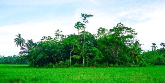 Mirissa Paddy island for sale