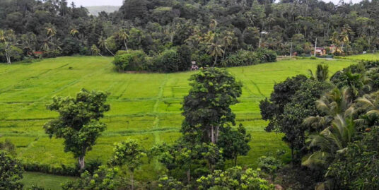 Yatagala, bare land with paddy views