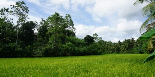 Ahangama paddy view property